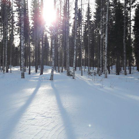 Luminen tontti Allaan tilalla, Koti Rannalla –alueella odottaa kevään tuloa ja rakentajiaan.
